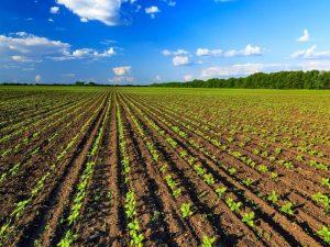 Progetti_sviluppo_albania_agricoltura